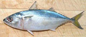 Bangda (Indian Mackerel)