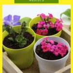 Edible dessert pots to invoke spring that resists